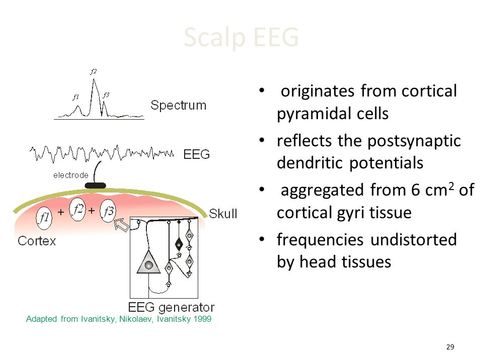 29 Scalp EEG originates from cortical pyramidal cells reflects the postsynaptic dendritic potentials aggregated from 6 cm 2 of cortical gyri tissue fr