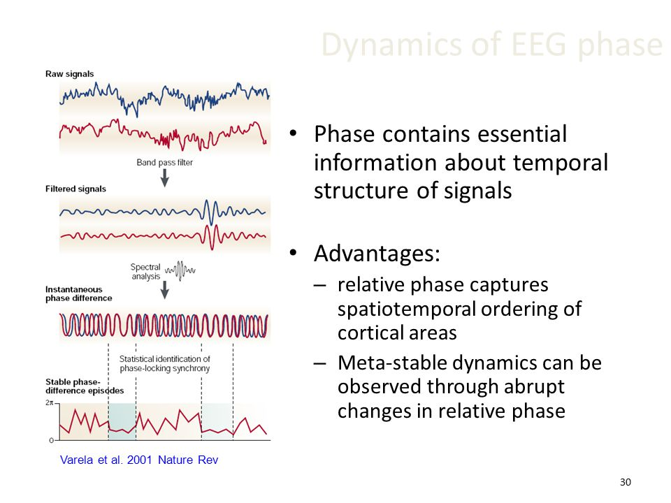 30 Dynamics of EEG phase Phase contains essential information about temporal structure of signals Advantages: – relative phase captures spatiotemporal ordering of cortical areas – Meta-stable dynamics can be observed through abrupt changes in relative phase Varela et al.