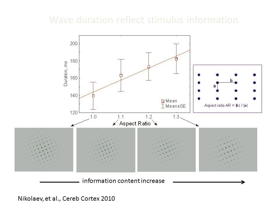 Wave duration reflect stimulus information Nikolaev, et al., Cereb Cortex 2010 information content increase