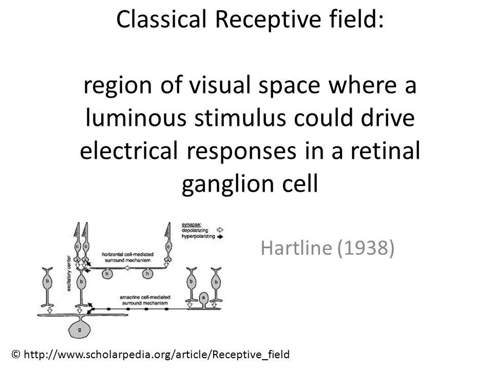 Nikolaev, Gong & van Leeuwen, Clin Neurophysiol 2005 Phase synchrony is information-Specific