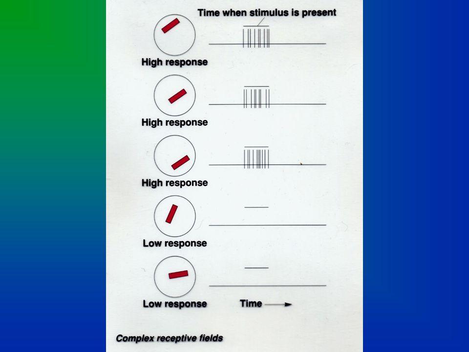 CORTEX: Complex Cells