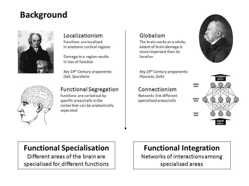 History: Functional Specialisation Different areas of the brain are specialised for different functions Functional Integration Networks of interactions among specialised areas Background Localizationism Functions are localized in anatomic cortical regions Damage to a region results in loss of function Key 19 th Century proponents: Gall, Spurzheim Functional Segregation Functions are caried out by specific areas/cells in the cortex that can be anatomically separated Globalism The brain works as a whole, extent of brain damage is more important than its location Key 19 th Century proponents: Flourens, Goltz Connectionism Networks link different specialised areas/cells