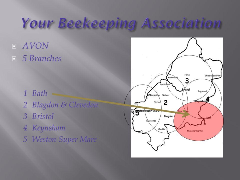  AVON  5 Branches 1Bath 2Blagdon & Clevedon 3Bristol 4Keynsham 5Weston Super Mare 5 2 3 4 1