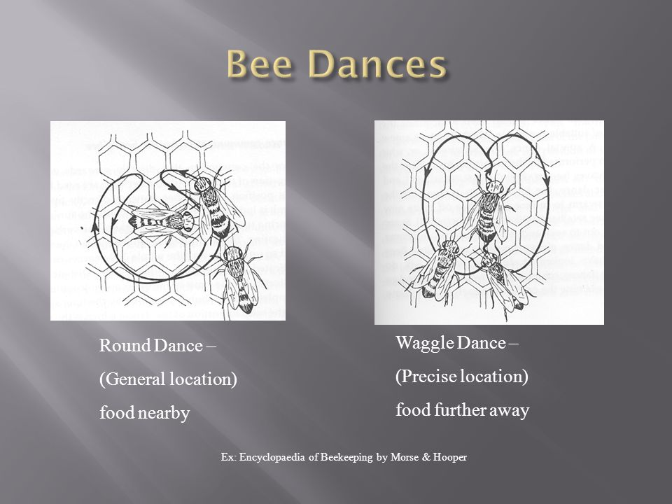 Round Dance – (General location) food nearby Waggle Dance – (Precise location) food further away Ex: Encyclopaedia of Beekeeping by Morse & Hooper