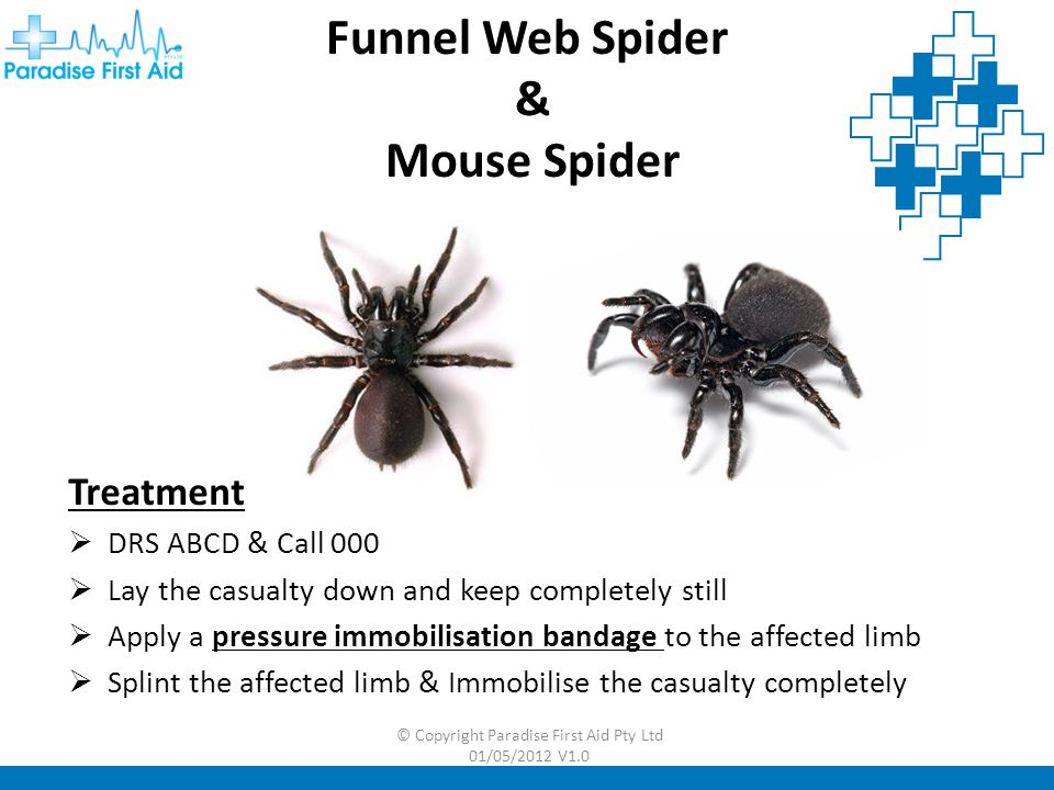 © Copyright Paradise First Aid Pty Ltd 01/05/2012 V1.0 Red Back & White Tailed Spider Treatment  DRS ABCD  Apply cold pack  Watch for allergic reaction  Seek medical advice