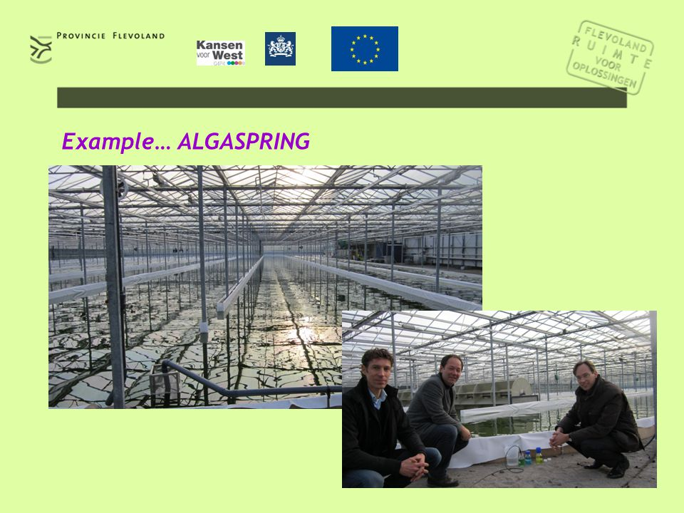 5 Example… ALGASPRING