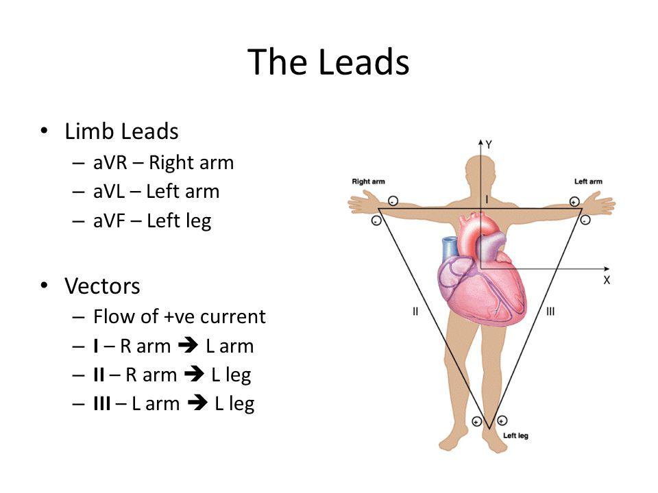 The Leads Limb Leads – aVR – Right arm – aVL – Left arm – aVF – Left leg Vectors – Flow of +ve current – I – R arm  L arm – II – R arm  L leg – III