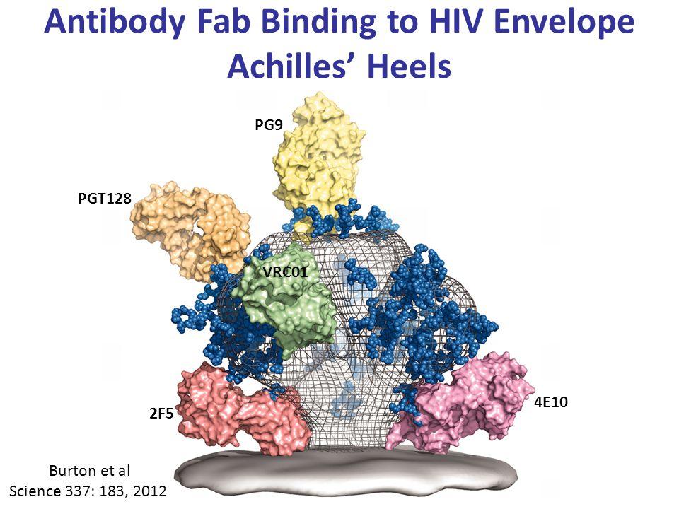 Antibody Fab Binding to HIV Envelope Achilles' Heels 4E10 2F5 PGT128 PG9 VRC01 Burton et al Science 337: 183, 2012