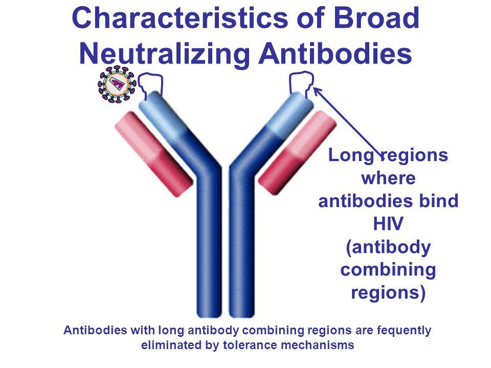 Characteristics of Broad Neutralizing Antibodies Long regions where antibodies bind HIV (antibody combining regions) Antibodies with long antibody com