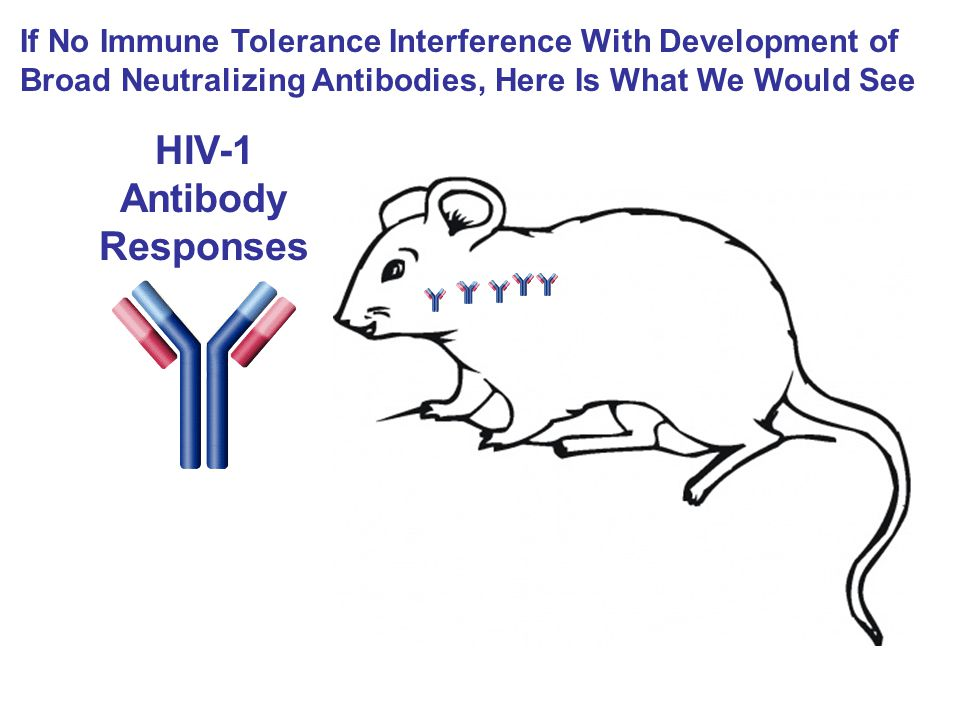HIV-1 Antibody Responses If No Immune Tolerance Interference With Development of Broad Neutralizing Antibodies, Here Is What We Would See