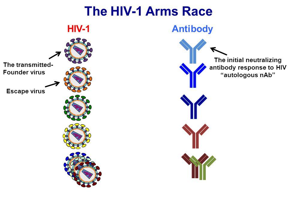 "The HIV-1 Arms Race HIV-1Antibody The transmitted- Founder virus The initial neutralizing antibody response to HIV ""autologous nAb"" Escape virus"