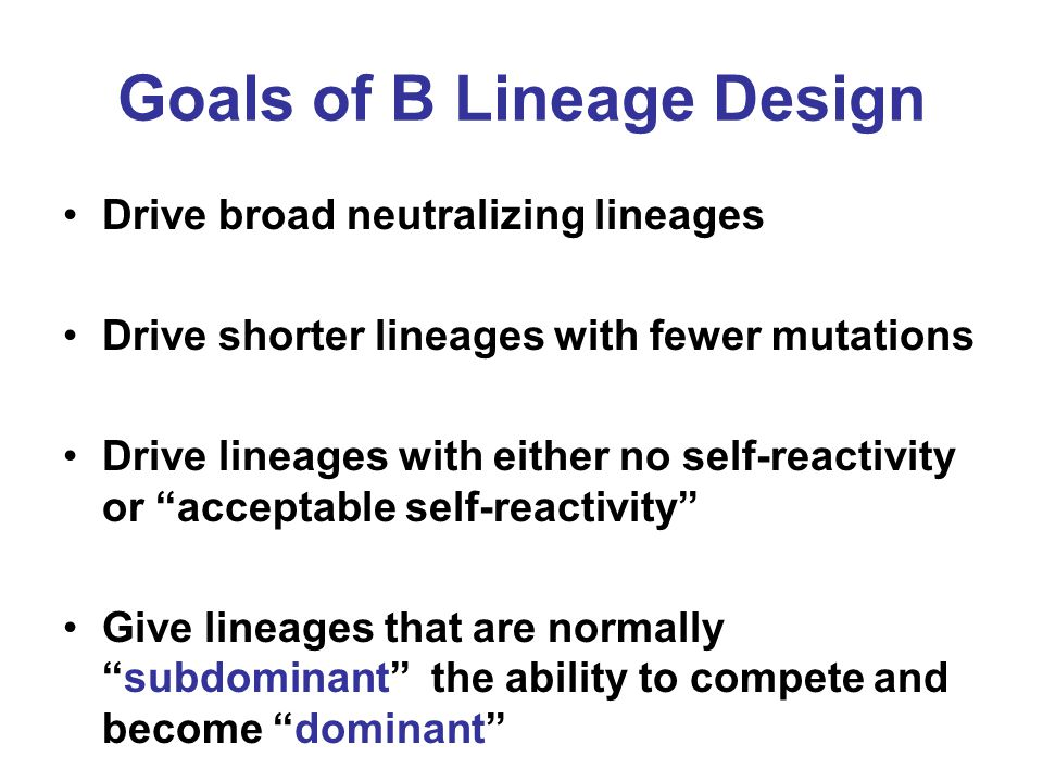 Goals of B Lineage Design Drive broad neutralizing lineages Drive shorter lineages with fewer mutations Drive lineages with either no self-reactivity