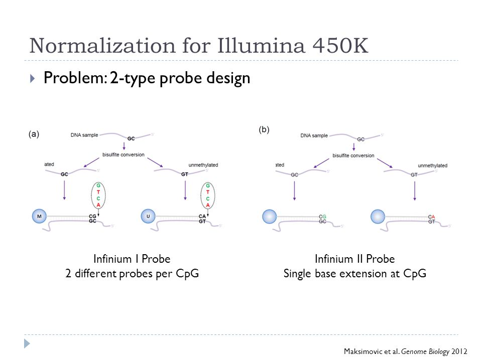 Normalization for Illumina 450K  Problem: 2-type probe design Infinium I Probe 2 different probes per CpG Infinium II Probe Single base extension at CpG Maksimovic et al.