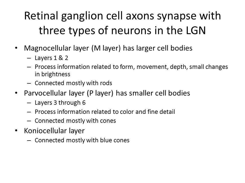 Retinal ganglion cell axons synapse with three types of neurons in the LGN Magnocellular layer (M layer) has larger cell bodies – Layers 1 & 2 – Process information related to form, movement, depth, small changes in brightness – Connected mostly with rods Parvocellular layer (P layer) has smaller cell bodies – Layers 3 through 6 – Process information related to color and fine detail – Connected mostly with cones Koniocellular layer – Connected mostly with blue cones