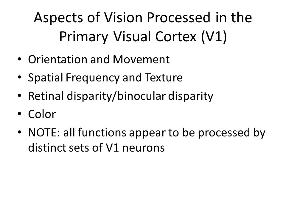 Aspects of Vision Processed in the Primary Visual Cortex (V1) Orientation and Movement Spatial Frequency and Texture Retinal disparity/binocular disparity Color NOTE: all functions appear to be processed by distinct sets of V1 neurons