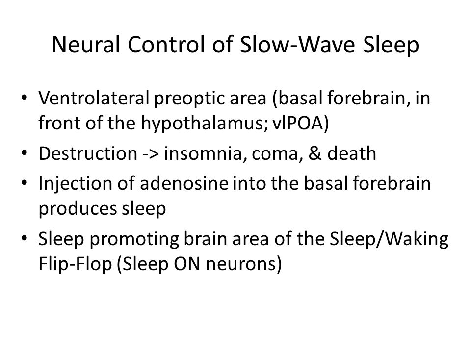 Neural Control of Slow-Wave Sleep Ventrolateral preoptic area (basal forebrain, in front of the hypothalamus; vlPOA) Destruction -> insomnia, coma, & death Injection of adenosine into the basal forebrain produces sleep Sleep promoting brain area of the Sleep/Waking Flip-Flop (Sleep ON neurons)
