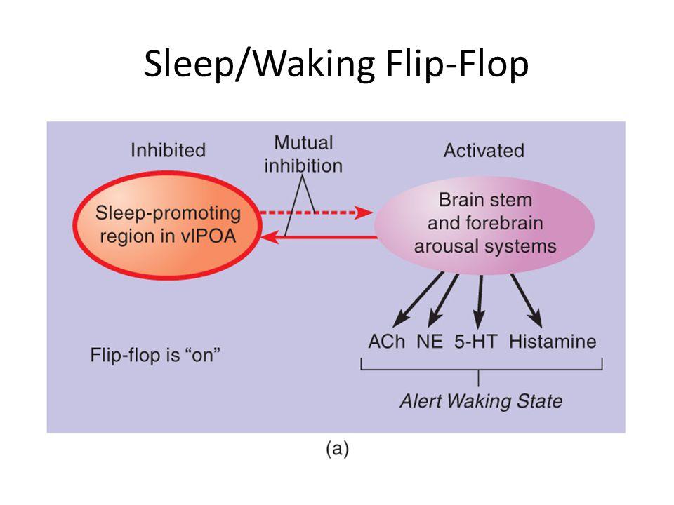 Sleep/Waking Flip-Flop