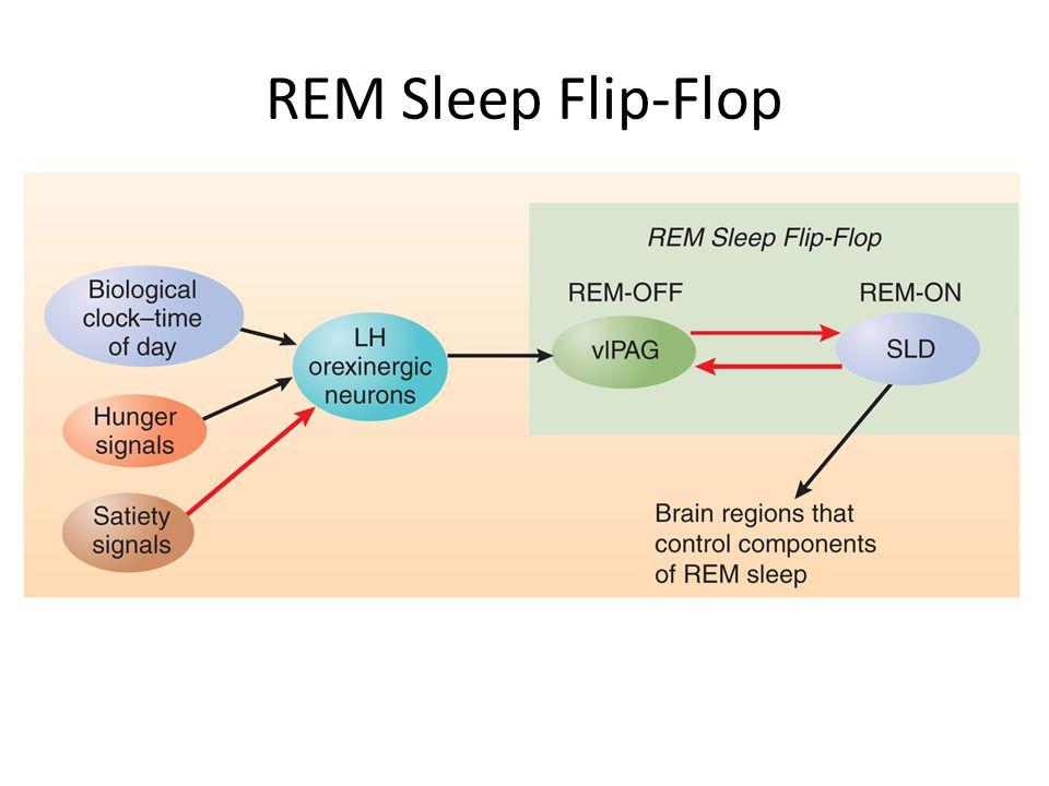 REM Sleep Flip-Flop