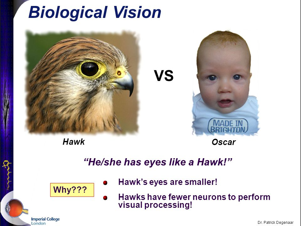 Overview of the Visual System Dr.