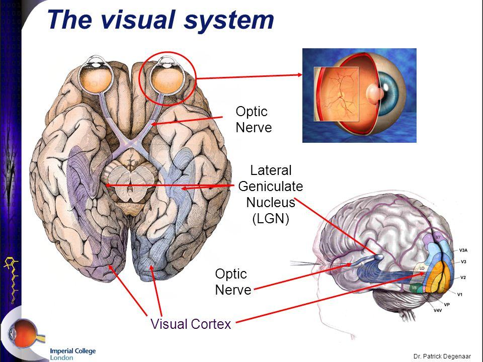 Dr. Patrick Degenaar What is the purpose of vision.