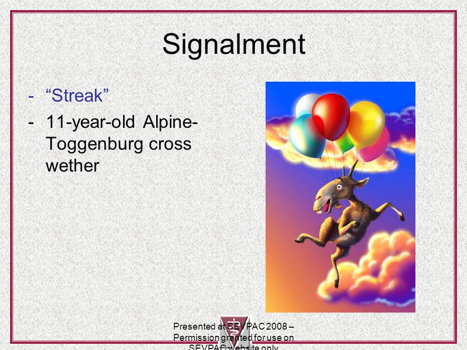 Signalment - Streak -11-year-old Alpine- Toggenburg cross wether Presented at SEVPAC 2008 – Permission granted for use on SEVPAC website only