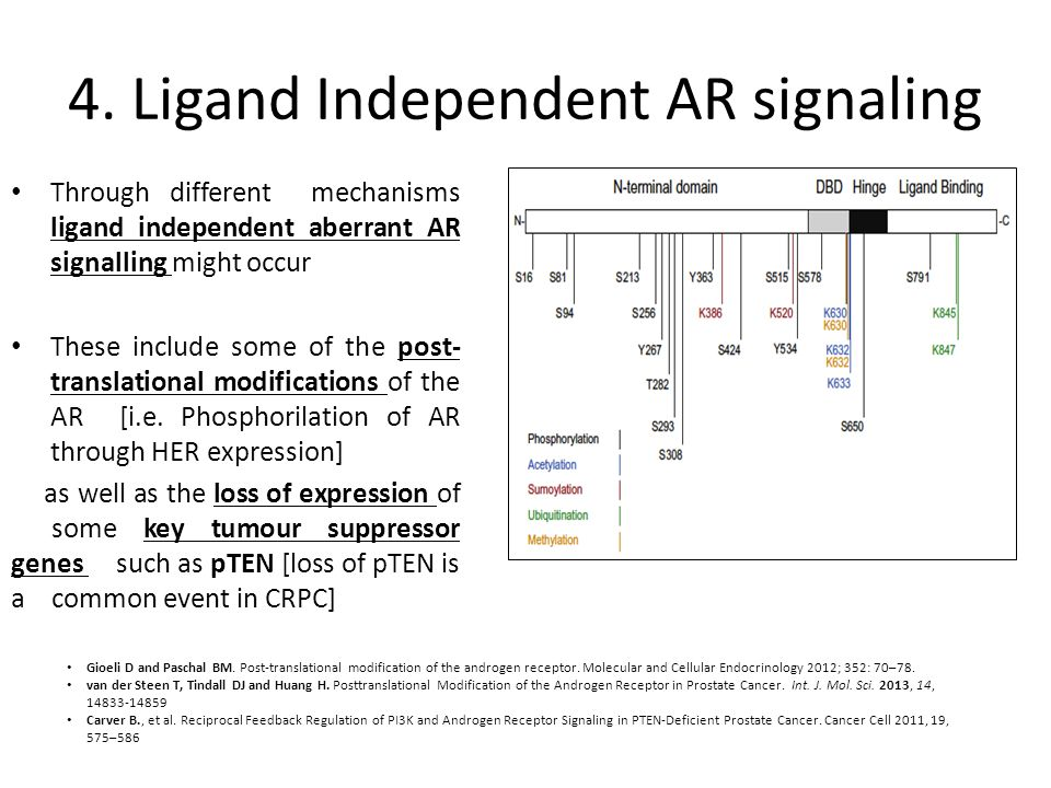 4. Ligand Independent AR signaling Through different mechanisms ligand independent aberrant AR signalling might occur These include some of the post-