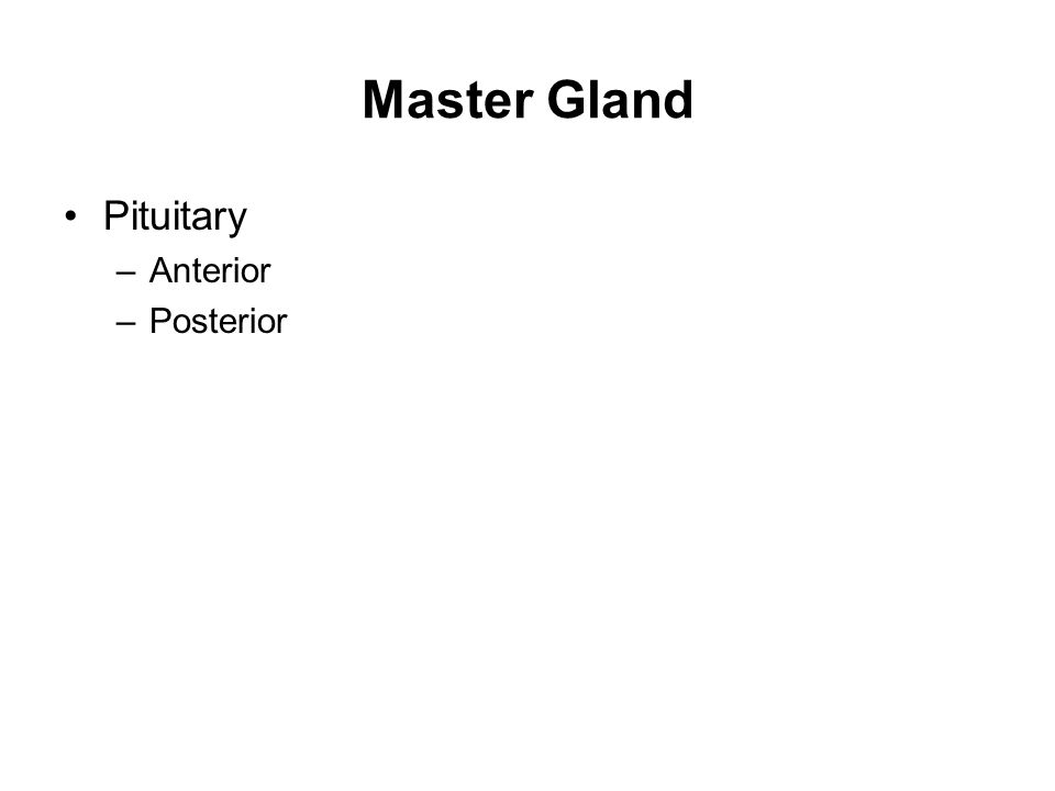Master Gland Pituitary –Anterior –Posterior