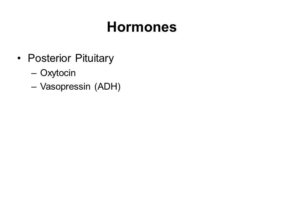 Hormones Posterior Pituitary –Oxytocin –Vasopressin (ADH)