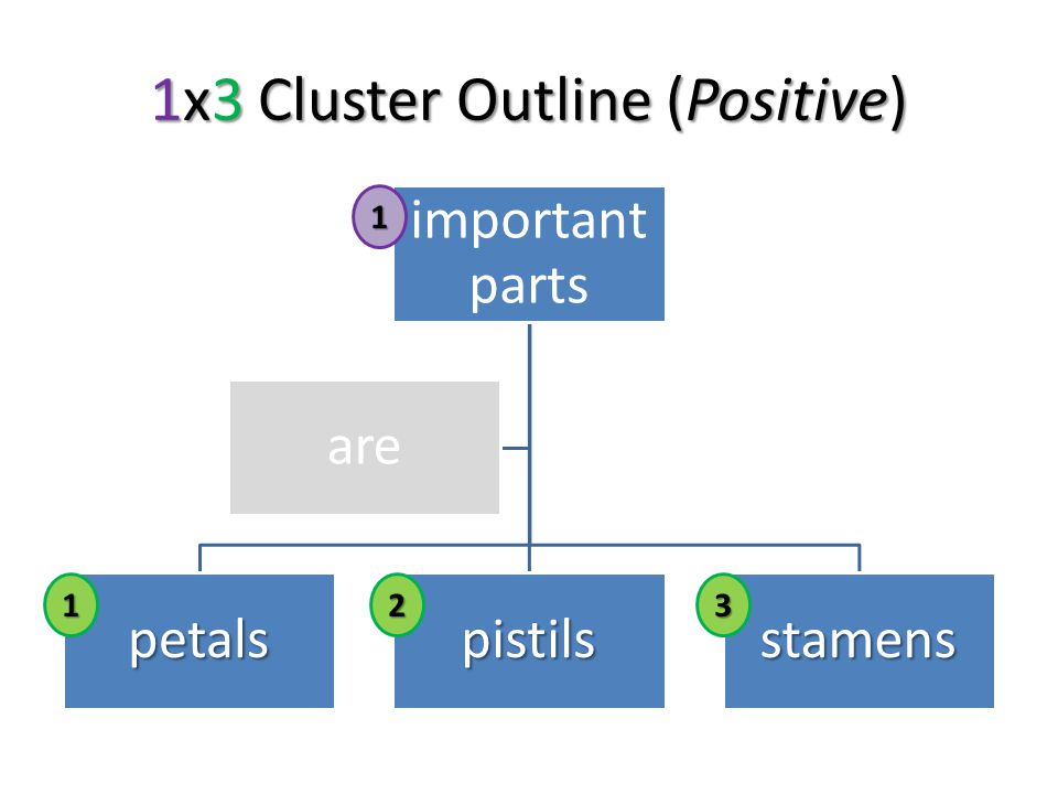 1x3 Cluster Outline (Positive) important parts petalspistilsstamens are123 1