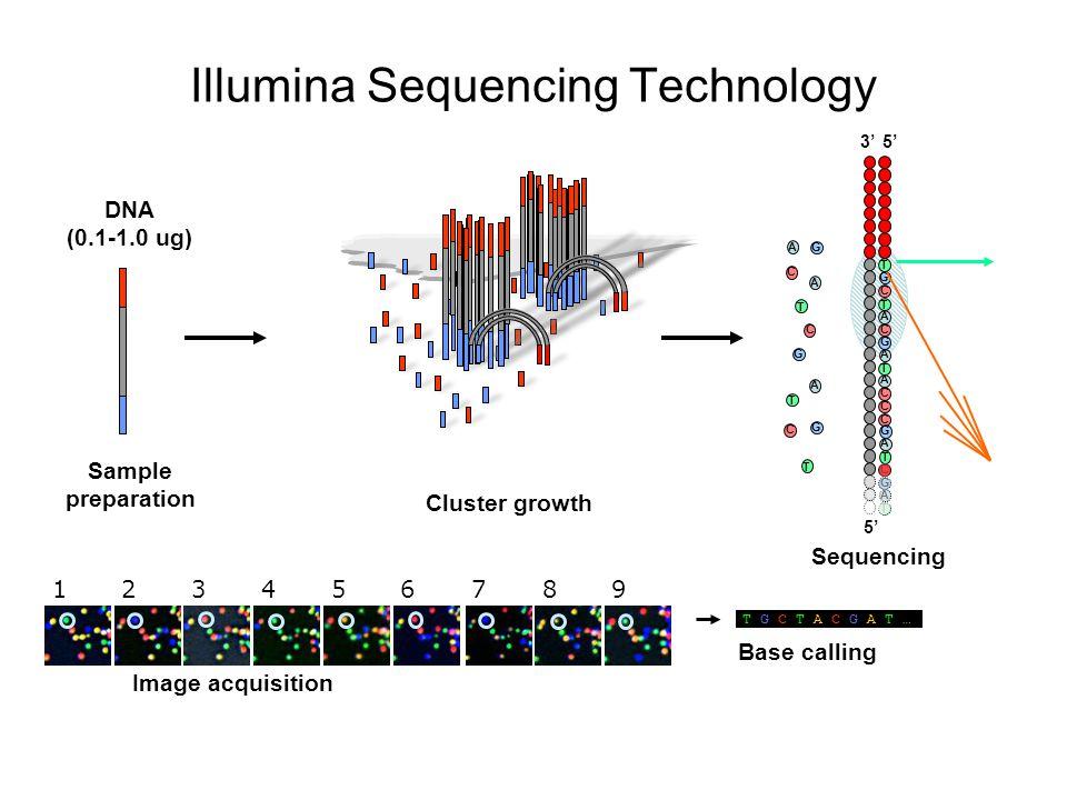 DNA (0.1-1.0 ug) Single molecule array Sample preparation Cluster growth 5' 3' G T C A G T C A G T C A C A G T C A T C A C C T A G C G T A G T 1237894