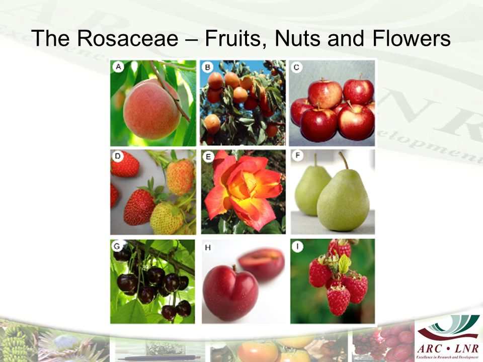 The Rosaceae – Fruits, Nuts and Flowers