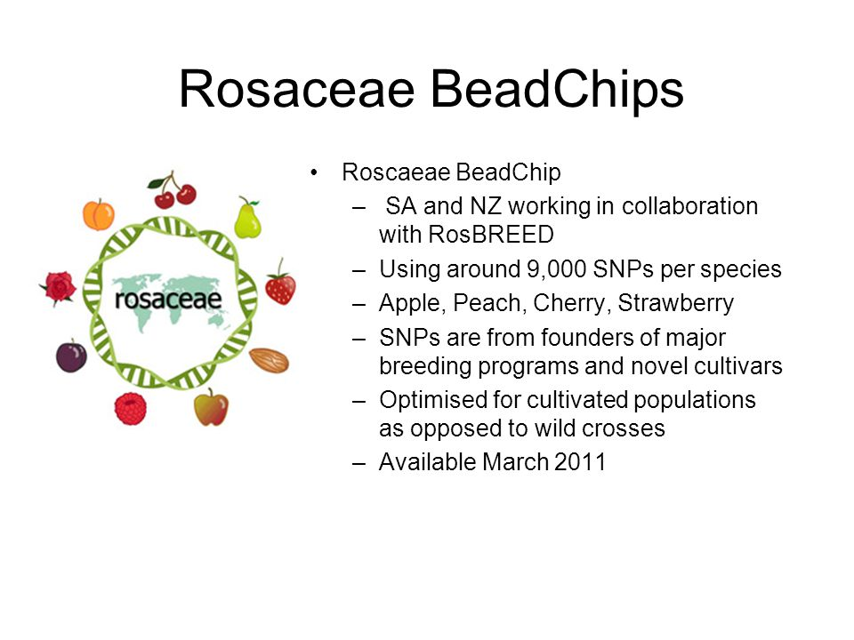 Rosaceae BeadChips Roscaeae BeadChip – SA and NZ working in collaboration with RosBREED –Using around 9,000 SNPs per species –Apple, Peach, Cherry, St