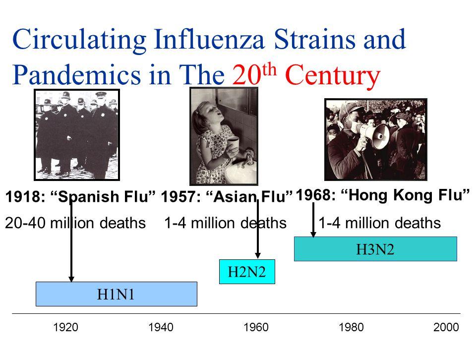 Circulating Influenza Strains and Pandemics in The 20 th Century 19201940196019802000 H1N1 H2N2 H3N2 1918: Spanish Flu 1957: Asian Flu 1968: Hong Kong Flu 20-40 million deaths1-4 million deaths