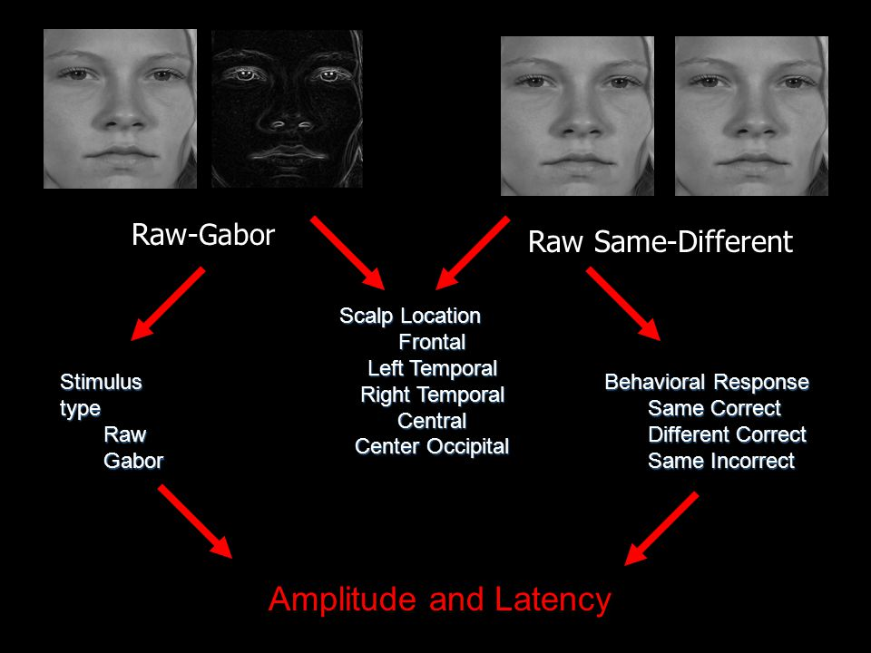 Raw- Gabor Raw Same-Different Scalp Location Frontal Left Temporal Right Temporal Central Center Occipital Behavioral Response Same Correct Different