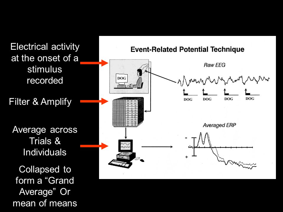 "Filter & Amplify Average across Trials & Individuals Collapsed to form a ""Grand Average"" Or mean of means Electrical activity at the onset of a stimul"