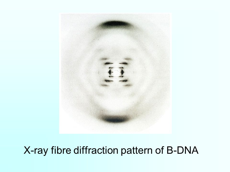 X-ray fibre diffraction pattern of B-DNA