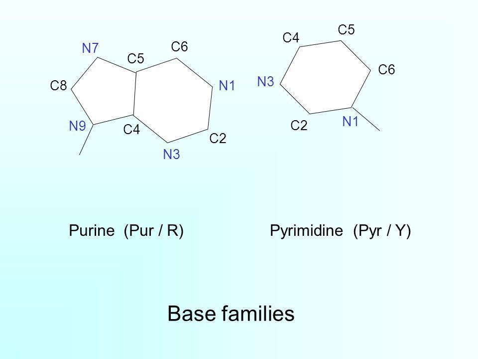 Base families Purine (Pur / R)Pyrimidine (Pyr / Y) C2 N1 C5 C6 N7 C4 C8 N9 N3 N1 C4 N3 C2 C5 C6