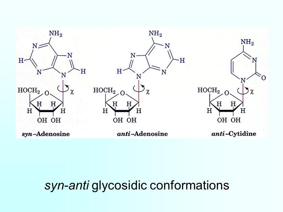 syn-anti glycosidic conformations