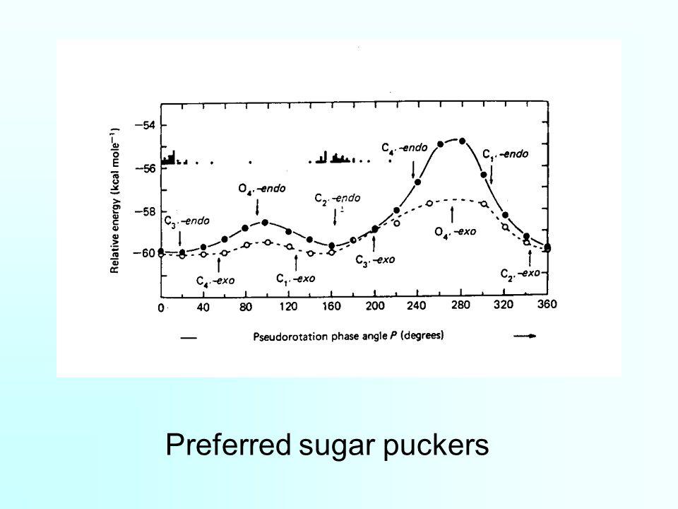 Preferred sugar puckers