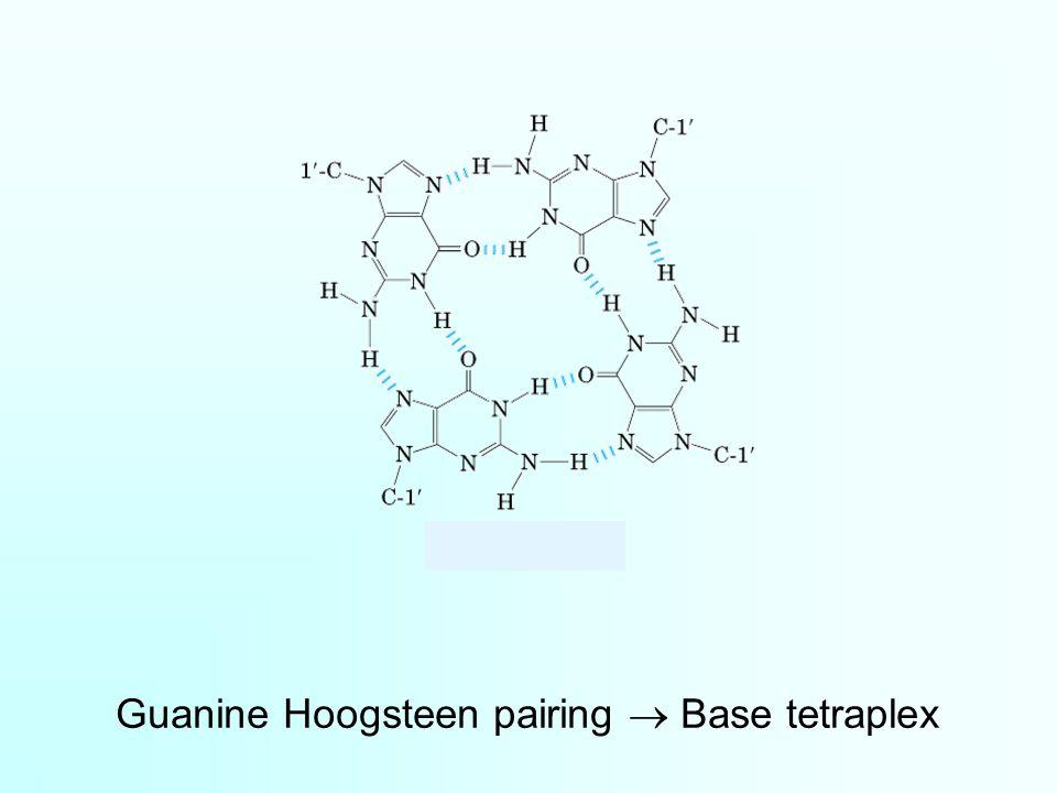 Guanine Hoogsteen pairing  Base tetraplex