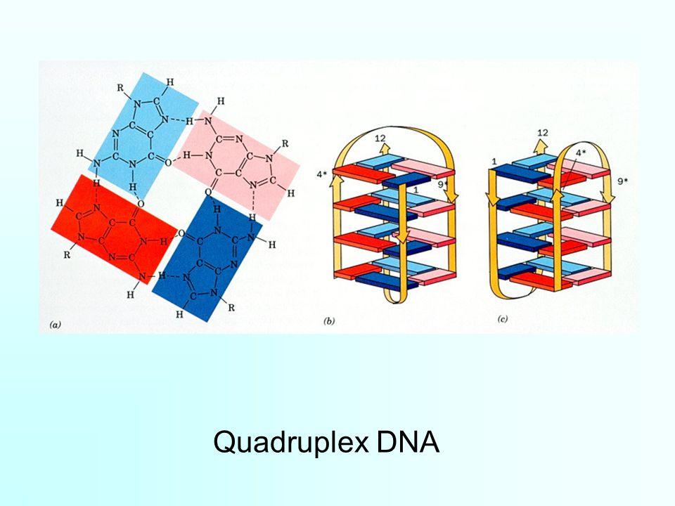 Quadruplex DNA