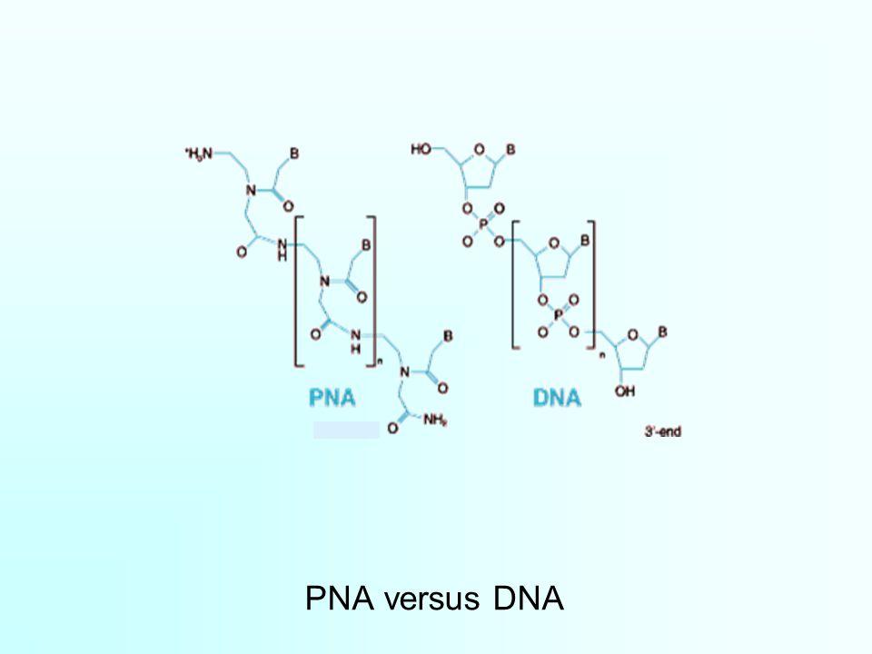 PNA versus DNA