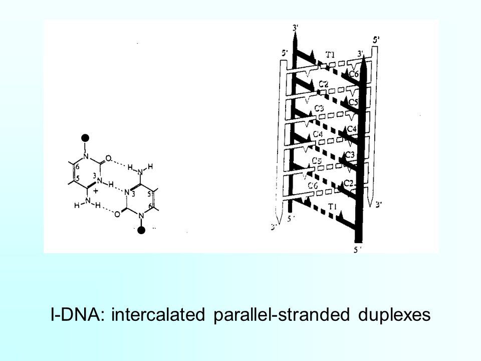 I-DNA: intercalated parallel-stranded duplexes