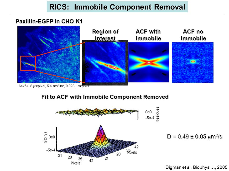 D = 0.49 ± 0.05  m 2 /s RICS: Immobile Component Removal Region of Interest ACF with Immobile ACF no Immobile Fit to ACF with Immobile Component Removed 64x64, 8  s/pixel, 5.4 ms/line, 0.023  m/pixel Paxillin-EGFP in CHO K1 Digman et al.