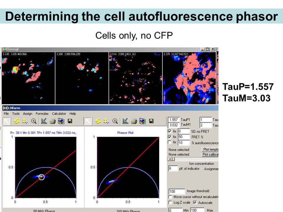 Determining the cell autofluorescence phasor TauP=1.557 TauM=3.03 Cells only, no CFP