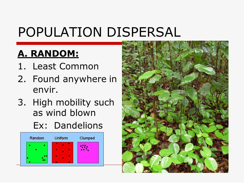 POPULATION DISPERSAL A. RANDOM: 1. Least Common 2. Found anywhere in envir. 3. High mobility such as wind blown Ex: Dandelions