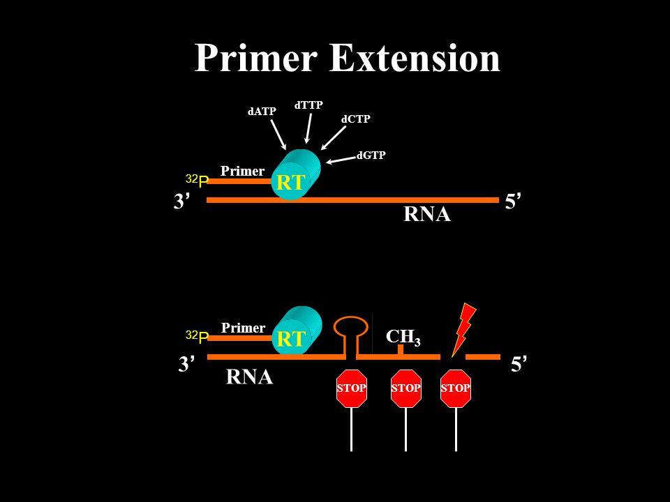Primer Extension RT Primer RNA 5'5' 3'3' Primer RNA 5'5' 3'3' dATP dTTP dCTP dGTP CH 3 STOP 32 P RT