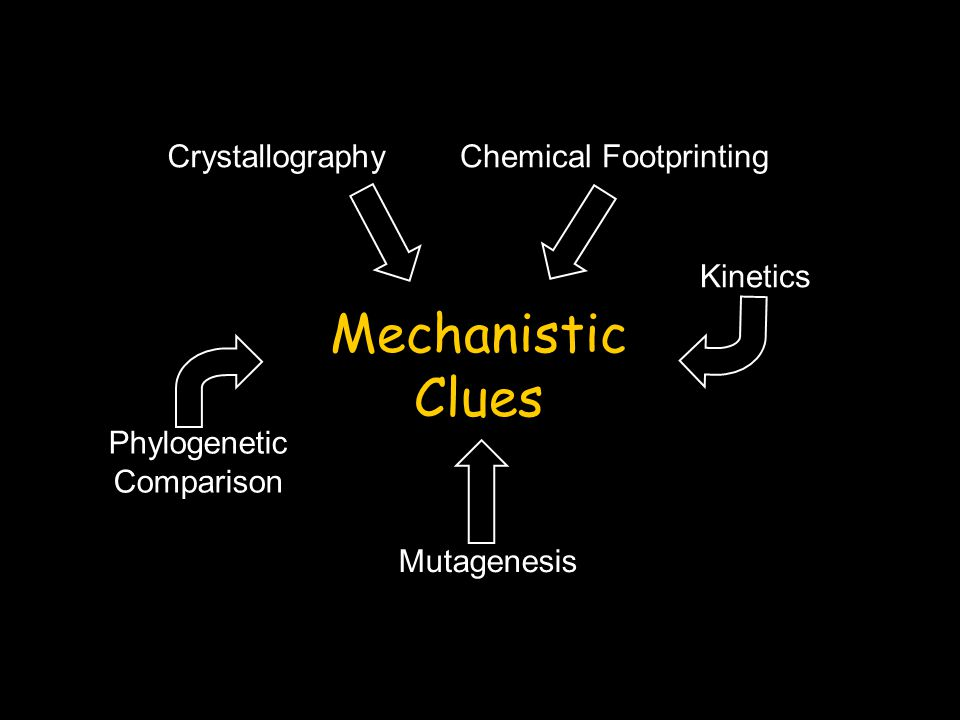 Mechanistic Clues CrystallographyChemical Footprinting Kinetics Mutagenesis Phylogenetic Comparison