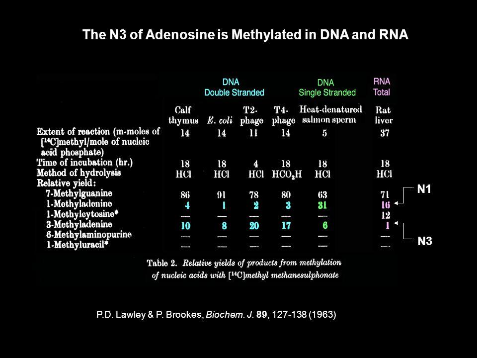 The N3 of Adenosine is Methylated in DNA and RNA N1 N3 P.D. Lawley & P. Brookes, Biochem. J. 89, 127-138 (1963)