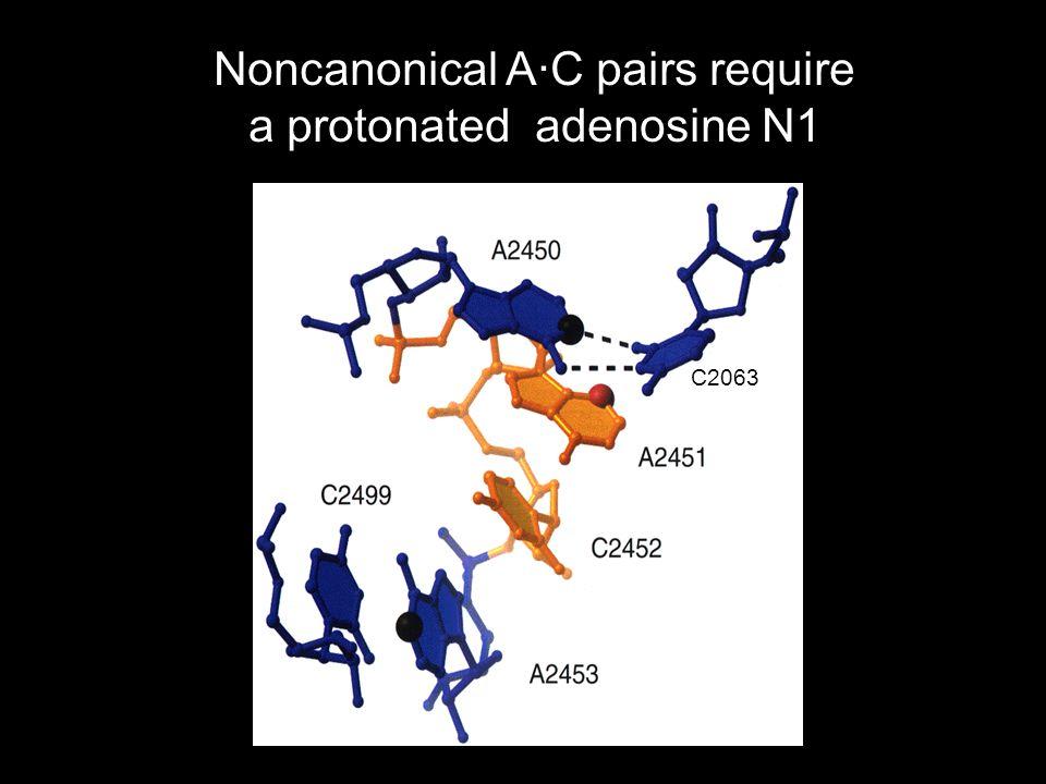 Noncanonical A·C pairs require a protonated adenosine N1 C2063